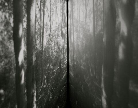 이승연 <The Frozen Forest>